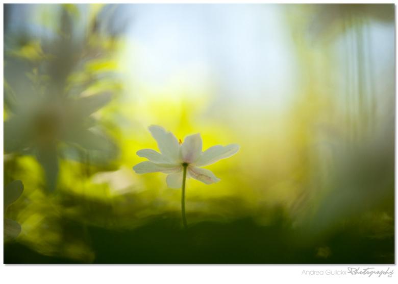Springbreeze green