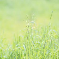 Groen is gras
