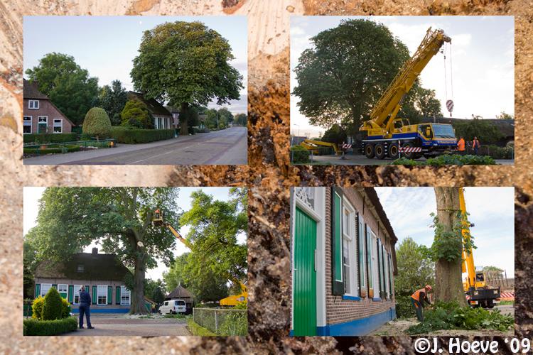 Kastanjeboom - Kastanjeboom in Rouveen was tijdbom.<br /> <br /> De stam was verrot. De kap die drie uur in beslag nam. Er werd groot materieel inge