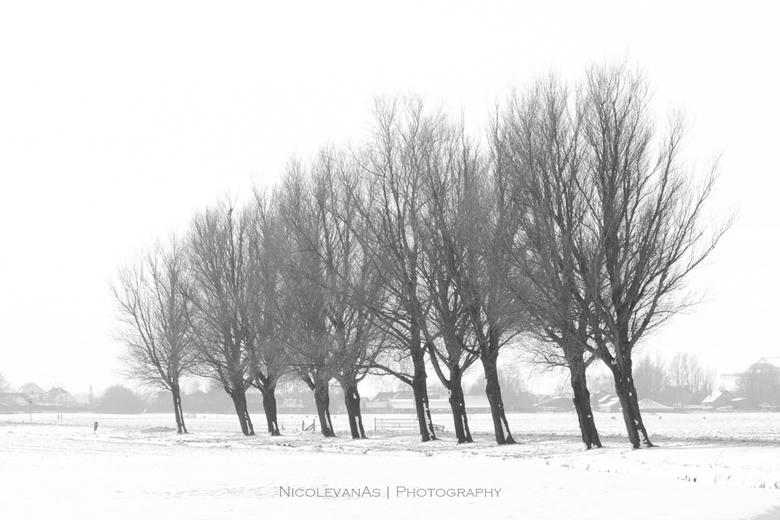 Winterlijnen. - Bomenrij in de sneeuw. Door het sneeuwlandschap zat er al weinig kleur in de foto.  Om de bomen nog meer te accentueren omgezet naar m