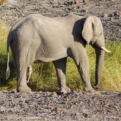 Namibië 86
