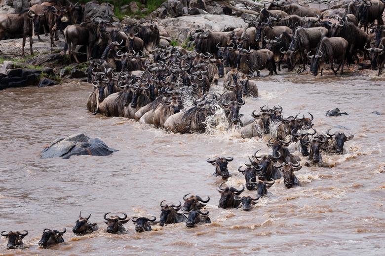Crossing Serengeti Tanzania - Vorig jaar in september een tweetal crossings mogen meemaken in het noorden van de Serengeti. Heel erg bijzonder dit nat