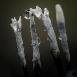 schimmel in het bos