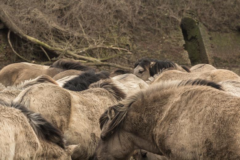 """Paarden bij de Blauwe Kamer - Gelukkig allemaal op het droge <img  src=""""/images/smileys/wilt.png""""/>"""