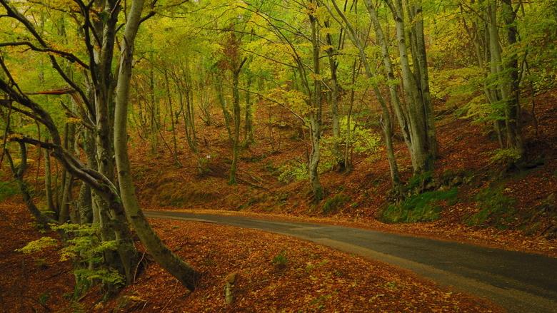 Forest - beukenbos in herfstkleuren Ik was onderweg en ben gestopt om wat clichés te klikken. <br />