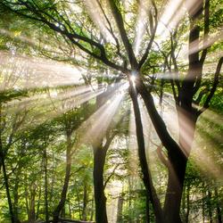 De zon schijnt in het Speulderbos