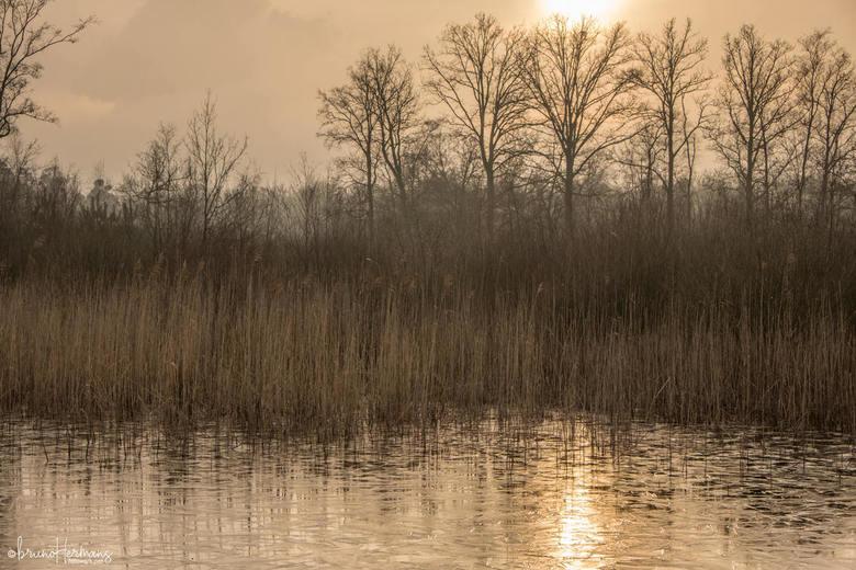Kortenhoeff  - Opname gemaakt in natuurgebied Kortenhoeff dat deel uitmaakt van Grenspark Zoom ( Kalmthoutse Heide)<br />