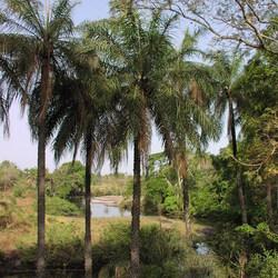 Darsalami - Gambia