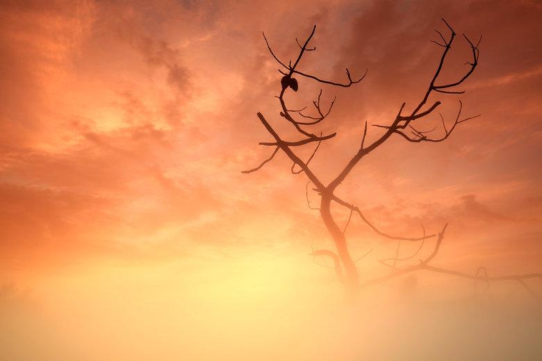 Sunset on Fire - In de duinen bij Schoorl deze dode Dennenboom.... en een mooie sunset… de onderkant iets rustiger gemaakt met een Lee-Miststripe