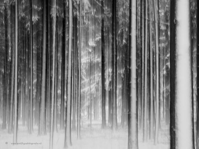 Grafische bomen in Hardenberg