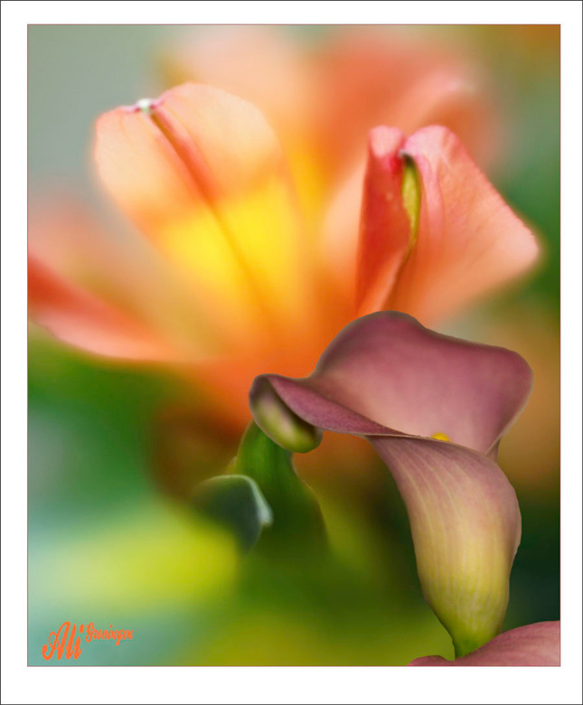 de zachtheid van bloemen.........