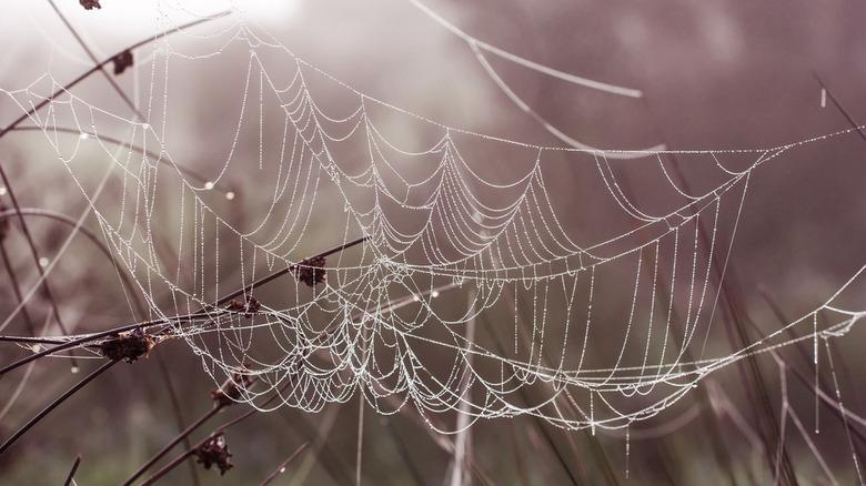 Hanging - Als een parelketting der natuur, maar pas op voor haar verleiding.