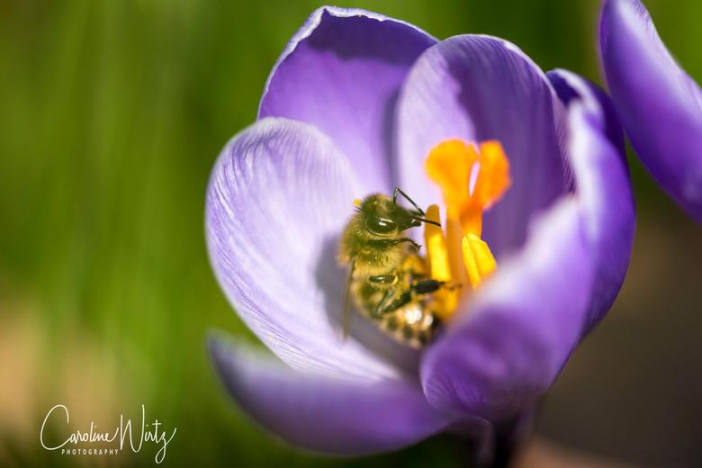 Snoepen van de nectar - Het ultieme voorjaarsgevoel!<br />
