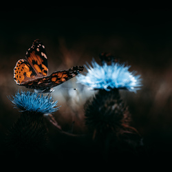 Lightroom Vlinder