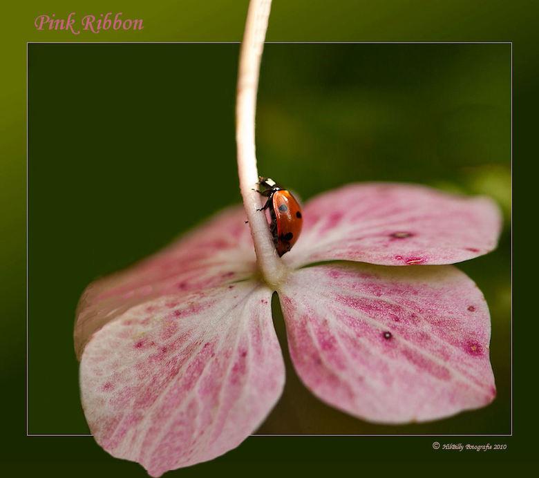 Pink Ribbon - Titel spreekt voor zich .<br /> Bedankt voor de reactie&#039;s op m&#039;n vorige up.<br /> Fijne dag verder .<br /> Groet , Hillie .