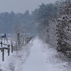 Winterslandschap Otterlo