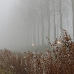 Koplampen in de mist