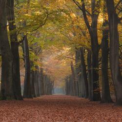 De Herfst in zijn kleur en pracht 2