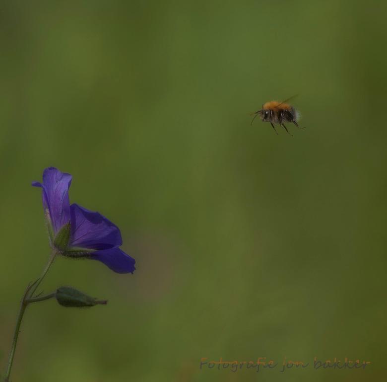 Natuur is beleven  -