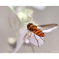 Op weg naar de nectar...