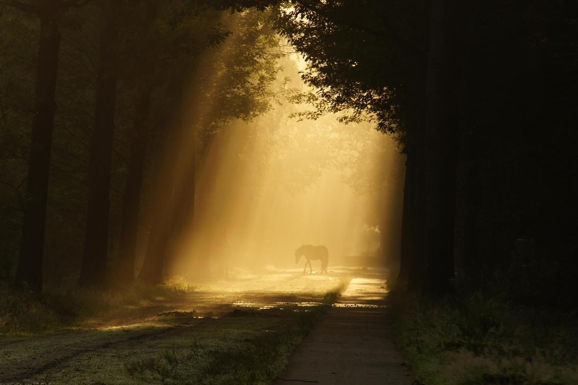 paard in zonlicht