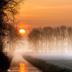 Golden Misty Morning