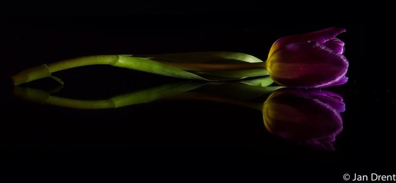Tulpje - Tulpje