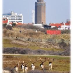 We gaan naar Zandvoort toe..