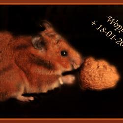 Mijn lieve hamster...