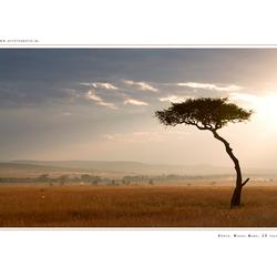 Masai Mara NP, Kenia
