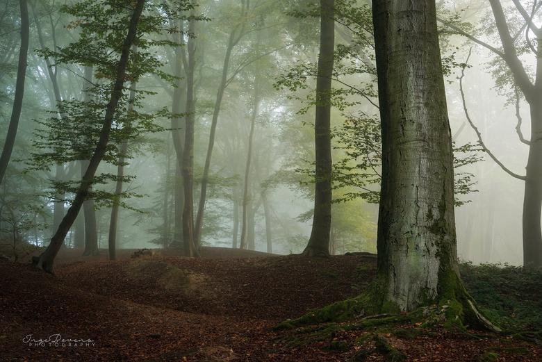Silent Dawn. -