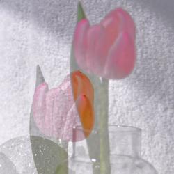 Tulp anders