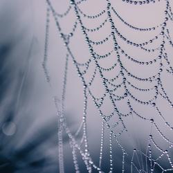 diamanten web