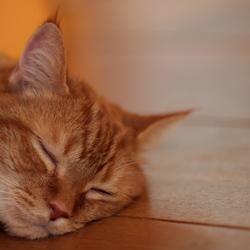 Sleepy Bink