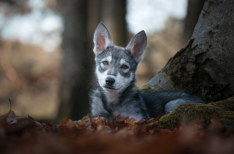 Zivah. - Deze enorm lieve puppy was een top model! Is ze niet knap?!
