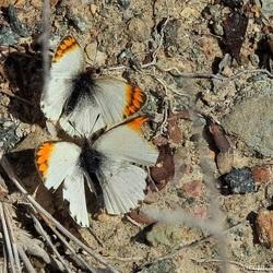 Twee hele kleine vlindertjes.....