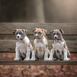 Drie op een rij