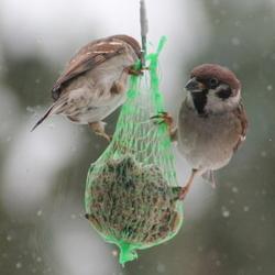 vogelsindewinter.jpg