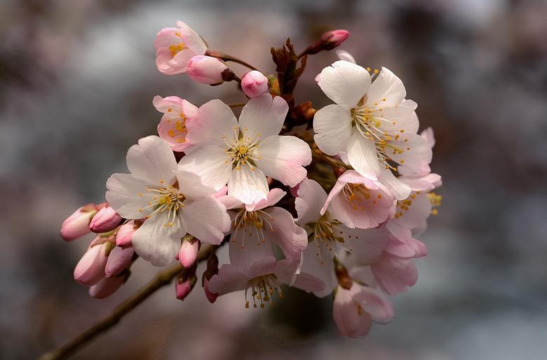 Heerlijke lente