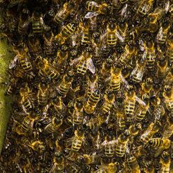 Wat bijen bij elkaar.jpg