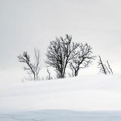 Stilleven in sneeuw