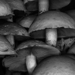 Zwart witte paddenstoeltjes