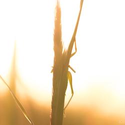 Verstoppertje tegen de ondergaande zon