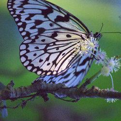 De Vlindertuin