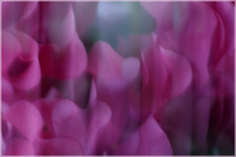rozachtig - compositie in roze.