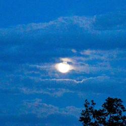 moonwolk