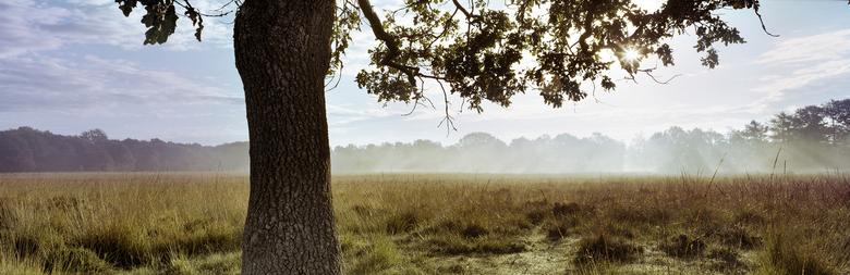 herfst harpen - ochtend op Bakkeveense heide.<br /> analoog op kodak portra 160 ISO film<br /> Fuji G617<br /> 2 stops ND filter