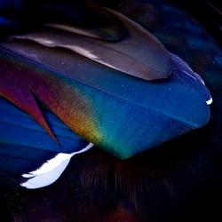 kleurenpracht