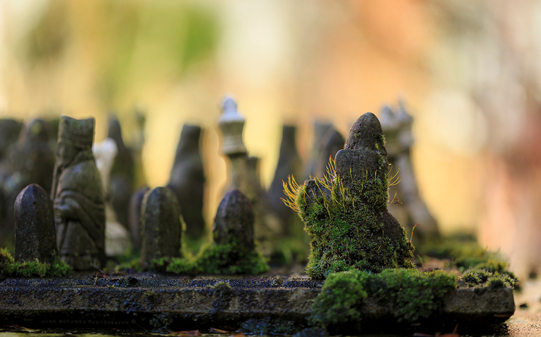 Nature takes over my chess game - Het betonnen schaakspel in mijn tuin wordt weer aardig overgenomen door de natuur.<br /> Iedere winter probeert het