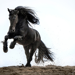 Horsepower is the greatest strenght...
